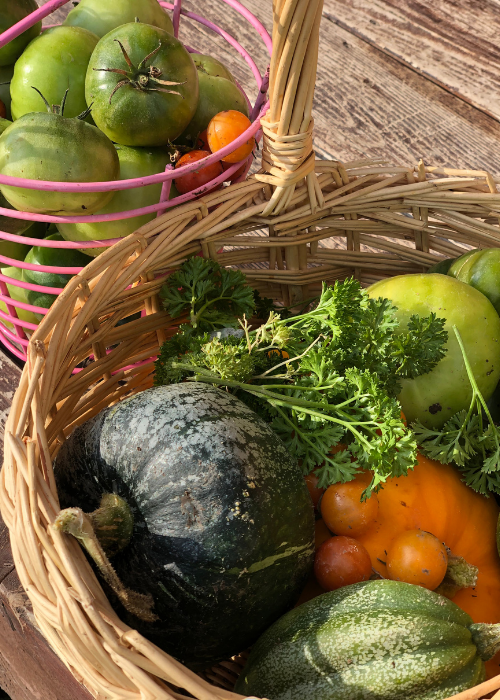 squash, tomatoes, herbs in baskets